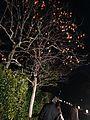 Japanese persimmon tree in front of Rakushisha.jpg