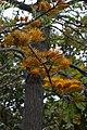 Jardim Botânico da Madeira DSC 0381 (14699608192).jpg