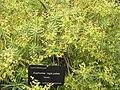 Jardinbotanique23.JPG
