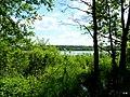 Jezioro Sępoleńskie widok z ścieżki przy brzegu. - panoramio.jpg