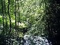 June Grüne Hölle Bergwälder The Glotter - Mythos Black Forest Photography 2013 green mountain forest - panoramio (1).jpg