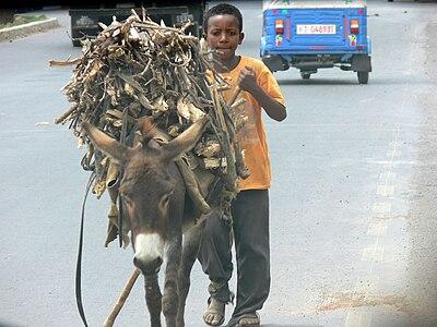 Junge mit Esel in Äthiopien.JPG