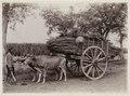 KITLV - 30208 - Kurkdjian, N.V. Photografisch Atelier - Soerabaja - Sugar company in East Java - 1921.tif