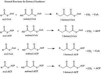 Ketoacyl synthase - The general mechanism for Ketoacyl synthases