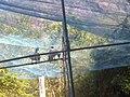 KURUMBAPATTI ZOOLOGICAL PARK, SALEM - panoramio (1).jpg