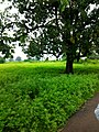 Kadiya, Madhya Pradesh, India - panoramio.jpg