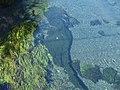 Kakita river, 20110918 B.jpg