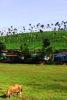Chundale Village in Kerala, India