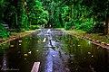 Kebun Raya Bogor 11.jpg