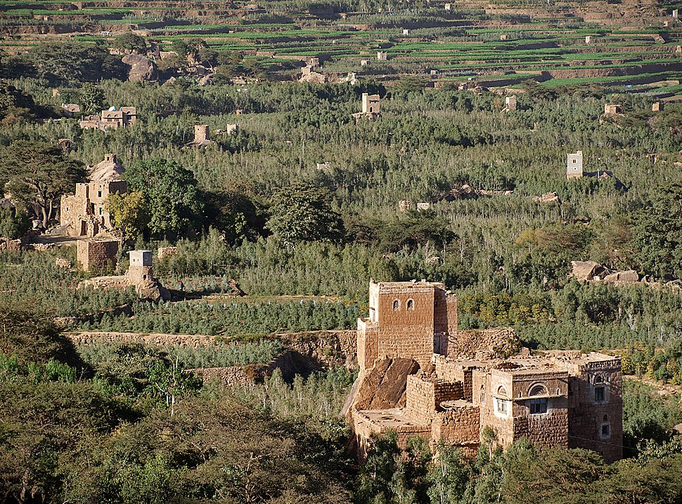 Khat fields in western yemen