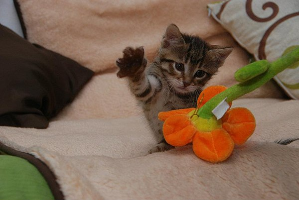 Kitten attacking plant.jpg
