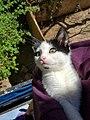 Kitten in Sun.jpg