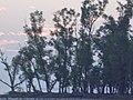 Kotka beach (১ম কটকা সৈকত)-৫.jpg