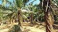 Krabi, 2014 (february) - panoramio (61).jpg