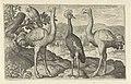Kroonkraanvogel tussen twee struisvogels.jpeg