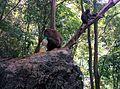 Kuah, Kedah, Malaysia - panoramio (1).jpg