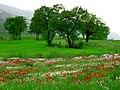 Kurdistan 20090511 07.jpg