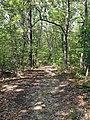 LaBarque Hills Trail.JPG