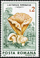Lactarius piperatus stamp-4290.jpg
