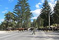 Lady ^ her cows take command of the road - panoramio.jpg