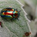 Lady Bug Colourful.jpg