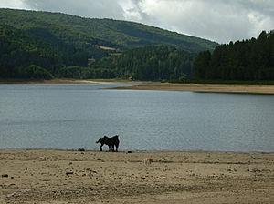 Lago Arvo - Image: Lago Arvo