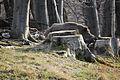 Lainzer Tiergarten Wildschweine 07.jpg
