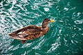 Lake Bled (9783645446).jpg