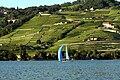 Lake Geneva Lavaux.jpg
