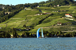 Climate categories in viticulture - Large bodies of water, such as Lake Geneva in Switzerland, can have a moderating effect on the climate of a region.