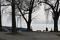 Lake Zurich - panoramio (6).jpg