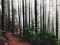 Landscape-nature-forest-trees-2 (24218576162).jpg