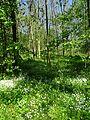 Landschaftsschutzgebiet Gestorfer Lößhügel (7).JPG