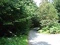 Lane through Cwm Tafolog - geograph.org.uk - 520727.jpg