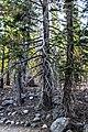 Lassen Volcanic National Park (1bc2c8e8-28d4-4369-ac54-5188927af5c1).jpg