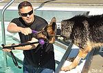 Law enforcement conducts K-9 water training 120918-F-TS228-080.jpg
