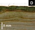 Layered stromatoliths.png