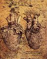 Leonardo da vinci, Heart and its Blood Vessels.jpg