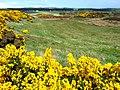 Leuchar Moss - geograph.org.uk - 728899.jpg