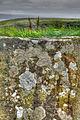 Lichen (8051043849) (2).jpg