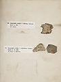 Lichenes Helvetici III IV 1842 020.jpg