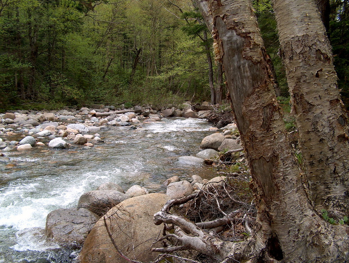 little river - photo #11