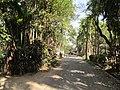 Local Road - Sarkhel Para - Baduria - North 24 Parganas 2012-02-24 2359.JPG
