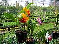 Một vườn hoa lan ở Sa Đéc.jpg