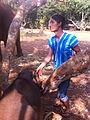 Mahout Patara Elephant Farm.jpg