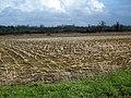 Maize stubble near Wallyer's Bridge - geograph.org.uk - 1734621.jpg