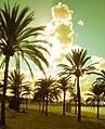 Mallorca - Contraluz sepia en la playa de El Arenal - panoramio.jpg