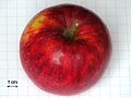 Malus Rajka Apple.JPG