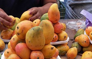 Mangifera indica - Creole mangos from Oaxaca, México