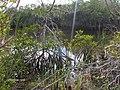 Mangroves at West Lake^ - panoramio (1).jpg